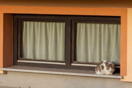 Zo makkelijk installeer je zelf een kattenluik